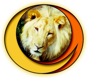Lion of Africa Tours and Safaris